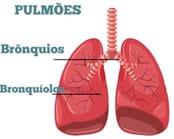 A Bronquiolite é uma inflamação nos bronquíolos dos pulmões. Na enorme maioria das vezes, o principal causador é o vírus chamado Vírus Sincicial Respiratório, mas também pode ser causada por outros vírus, como o Rhinovirus, Metapneumovirus, Parainfluenza, Influenza e outros.