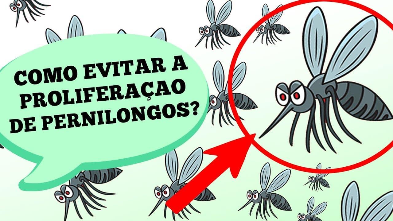 Com o verão chega também a maior época de proliferação de mosquitos da dengue e outros agentes transmissores de doenças. Por isso, hoje recebemos a entomologista Rosa Maria Tubaki para contar como ocorre a reprodução e como a prevenção desses casos pode ser feita.
